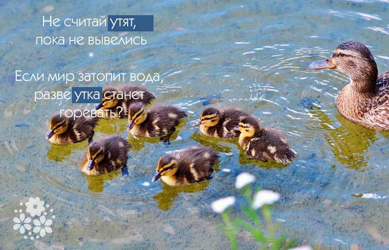 поговорки про птиц