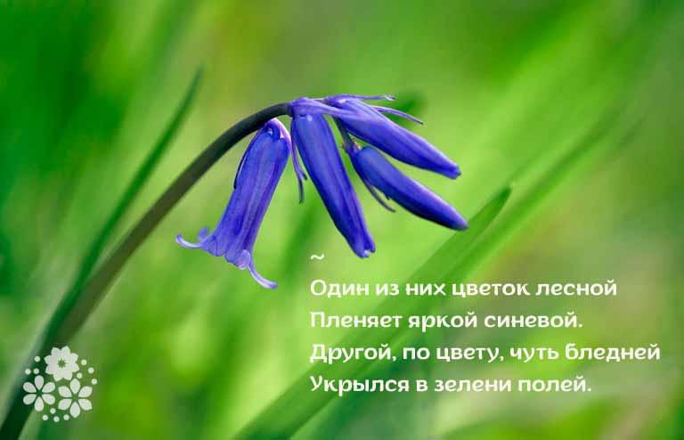 стихи о колокольчиках цветах