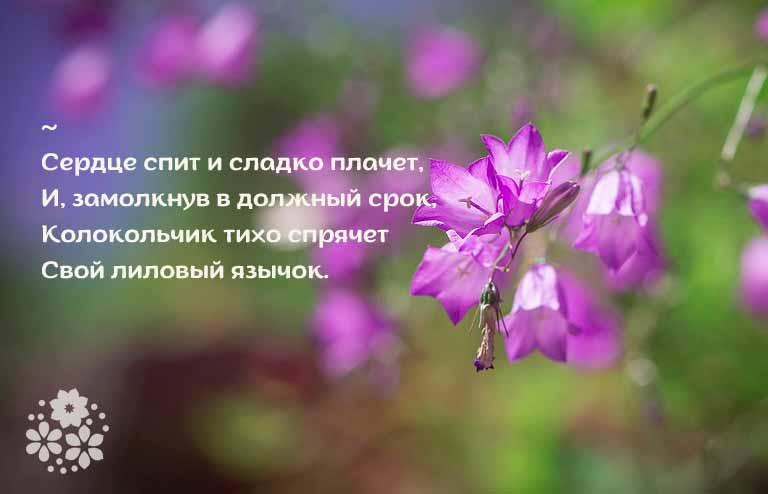 стихи про колокольчики цветы