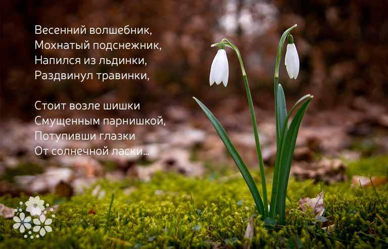 стихи про подснежники короткие и красивые