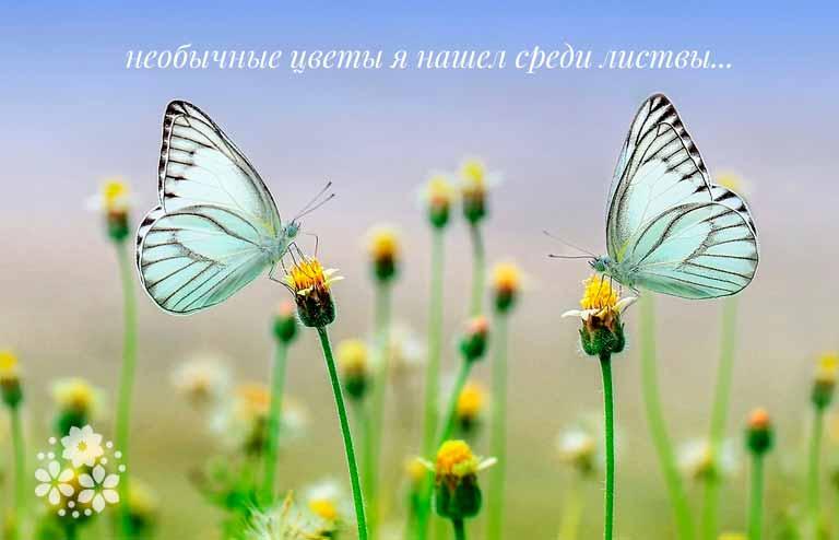 загадка про бабочку