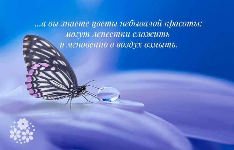 загадка про бабочку для детей 5-6 лет