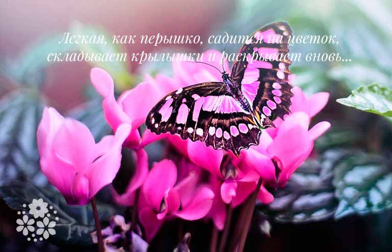 загадка с ответом бабочка