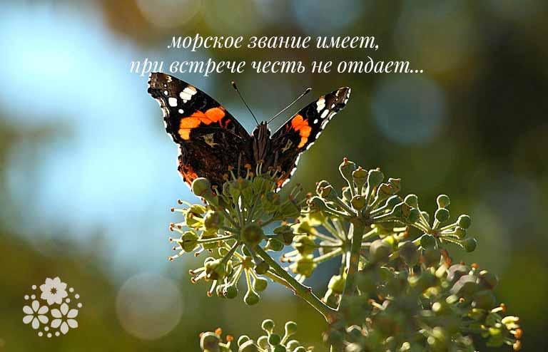 загадка про бабочку для малышей
