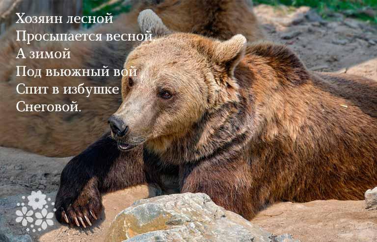 загадка о медведе
