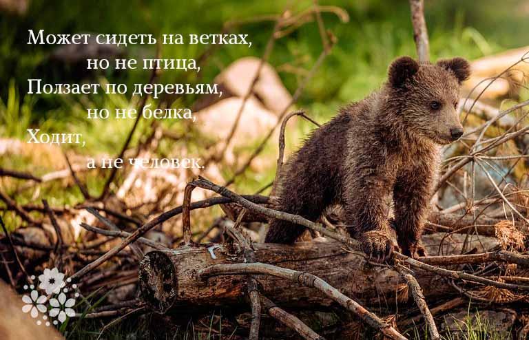 загадки про машу и медведя
