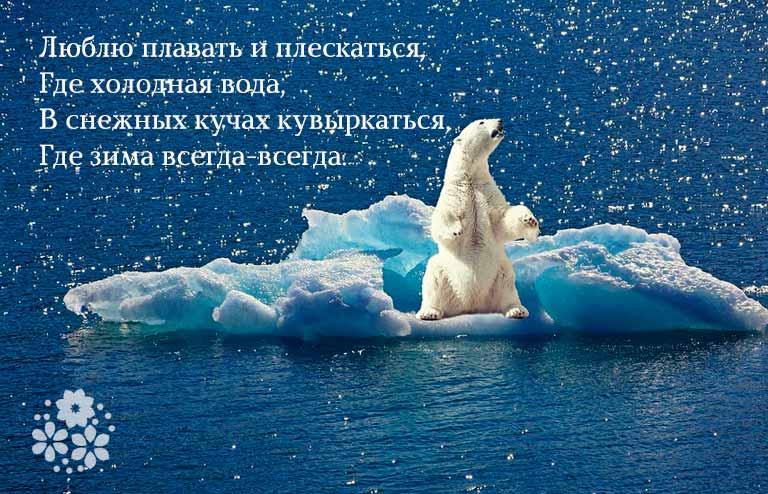 загадка про белого медведя