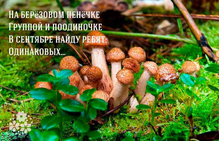 загадки про грибы с ответами