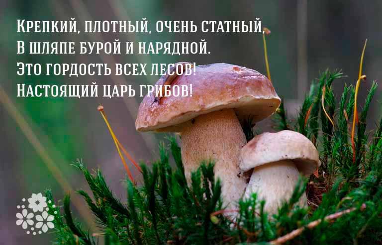загадка про белый гриб