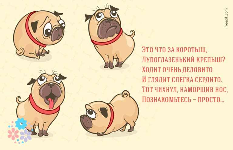 загадки о собаках