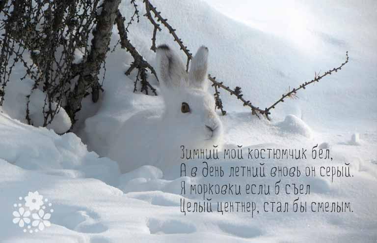 загадки про зайца для детей 7-8 лет загадка о зайце