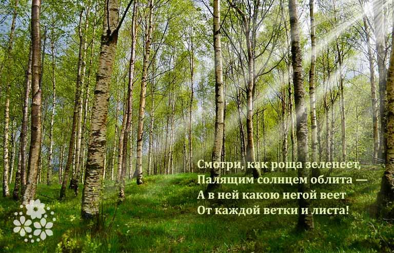 пушкин стихи о лете