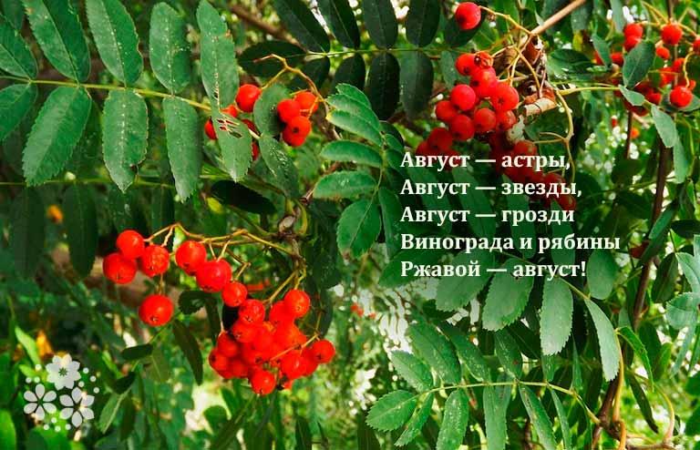 стихи есенина о лете