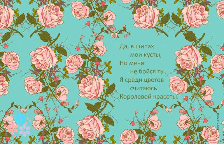 загадка про розу цветок