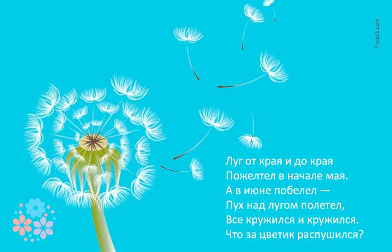 загадки про цветы с ответами