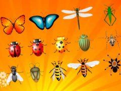 Мы над вами вверх ногами… Загадки про насекомых для детей