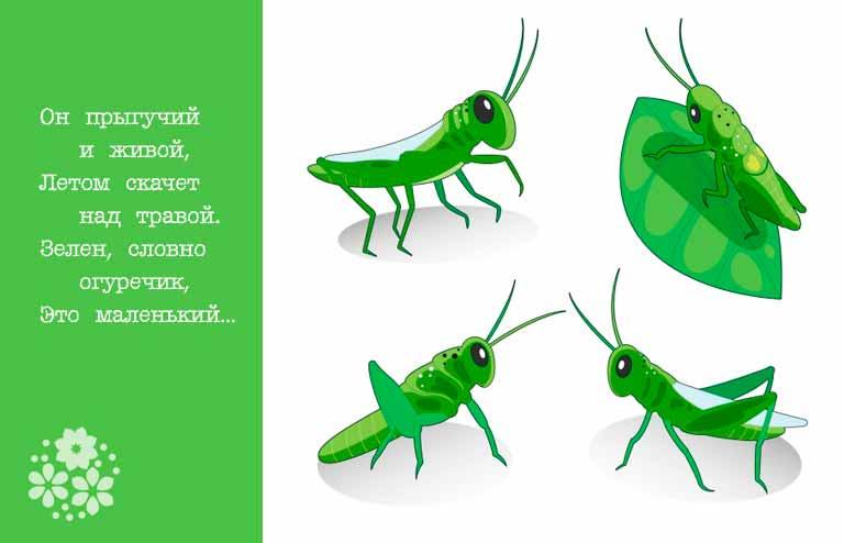 загадки про насекомых для детей