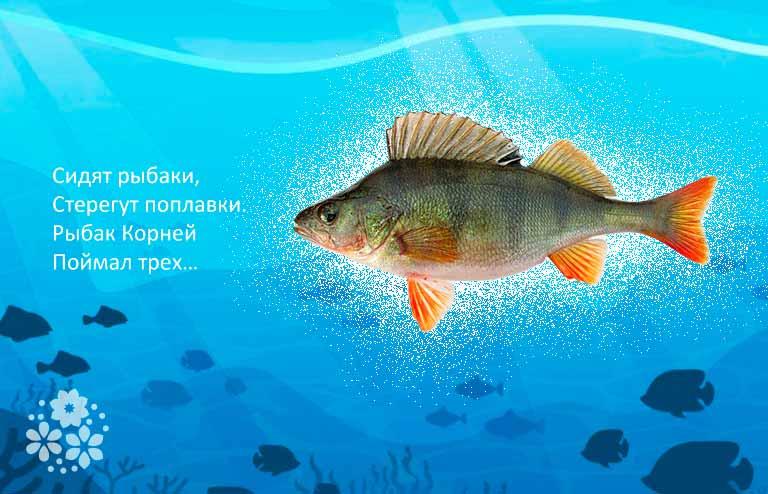 загадки о рыбах для детей с ответами