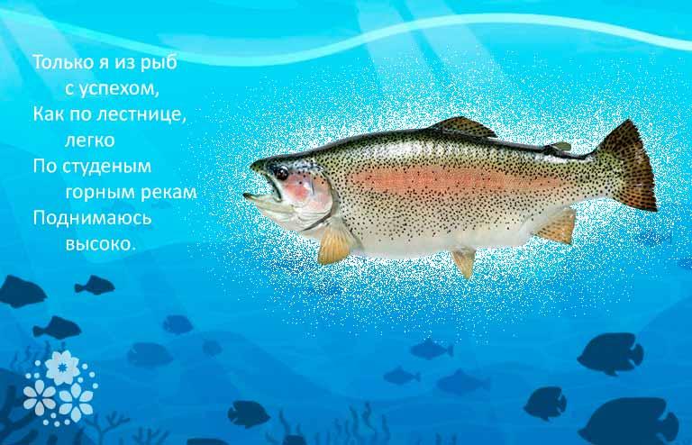 загадка про рыбу для детей