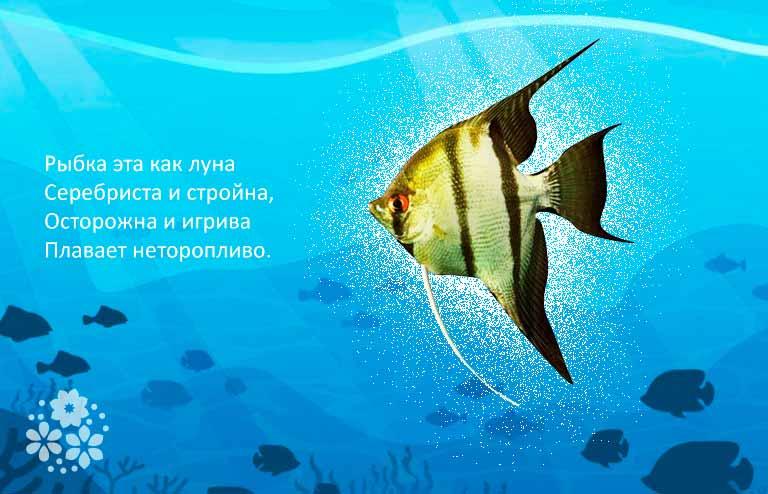 загадки о рыбах для дошкольников