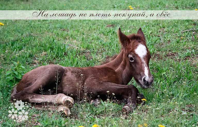 Пословицы и поговорки о любви к животным