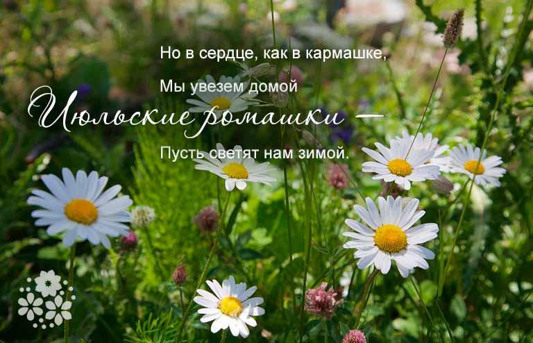 стихи про лето короткие и красивые