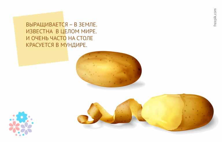 загадки для детей про овощи