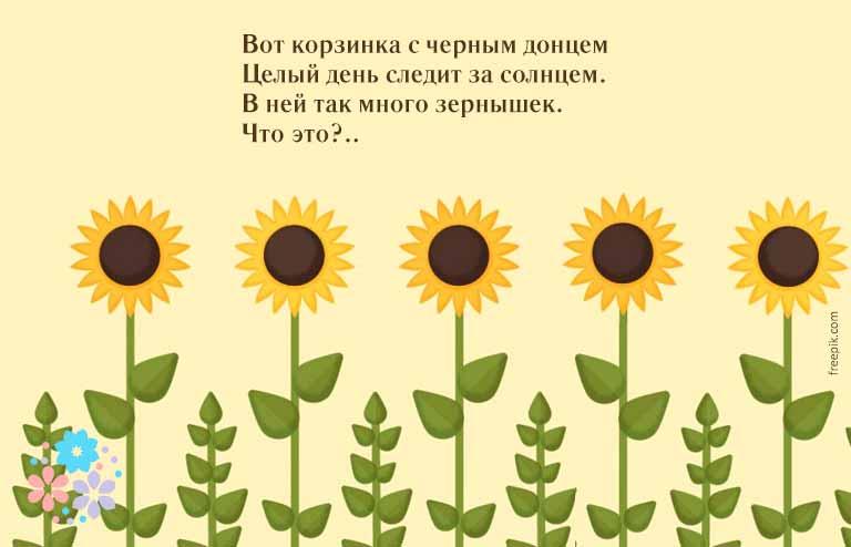 загадки про растения с ответами