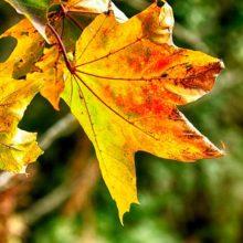 В осеннее ненастье семь погод на дворе. Приметы золотой осени