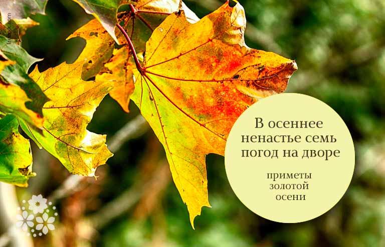 Приметы золотой осени