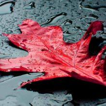 Осень вновь напомнила душе о самом главном. Цитаты из песен про осень