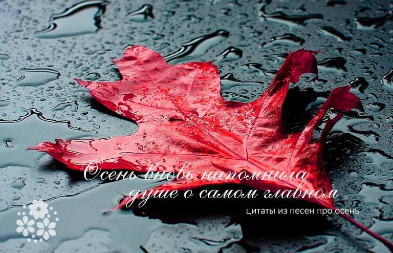 Цитаты из песен про осень