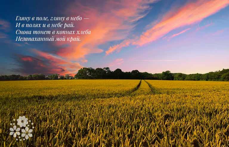 Красивые стихи Есенина о природе