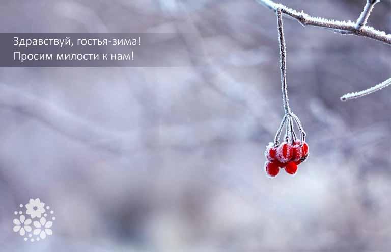 Цитаты про начало зимы
