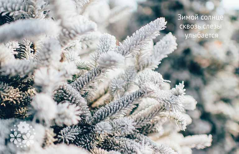 Пословицы и поговорки о зиме для школьников 1-2 классов
