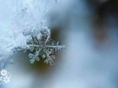 Снежинки пушистые сияют цветами радуги. Стихи про снежинки