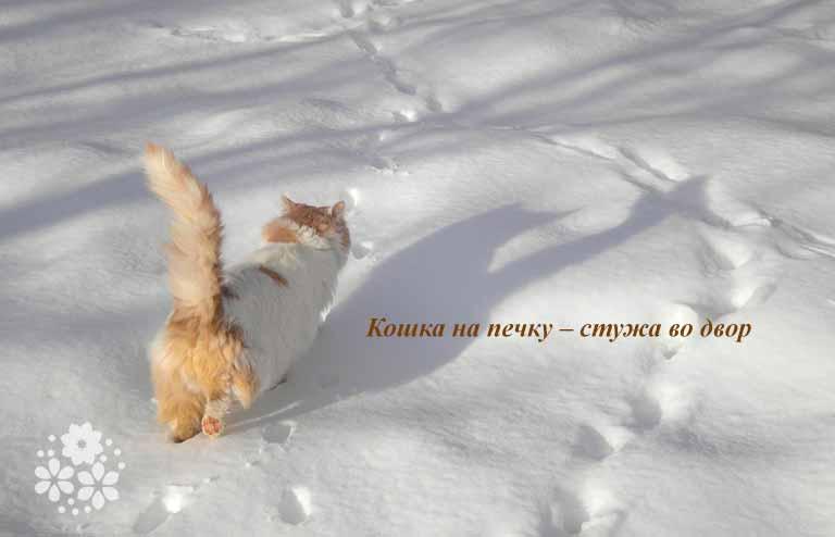 Народные приметы о зиме для школьников