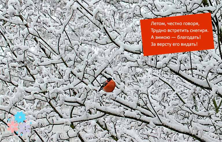 Короткие стихи про снегиря
