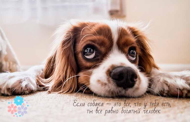 Цитаты и афоризмы про собак и человека