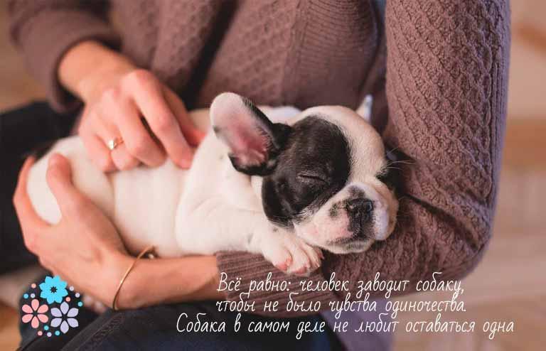 Красивые цитаты про любовь к собакам