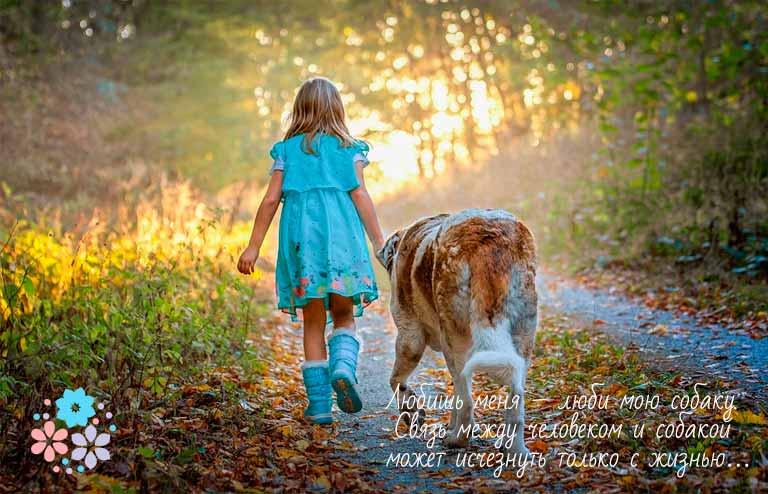 Цитаты про преданность и верность собак