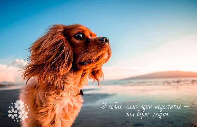 Цитаты из фильмов и книг про собак