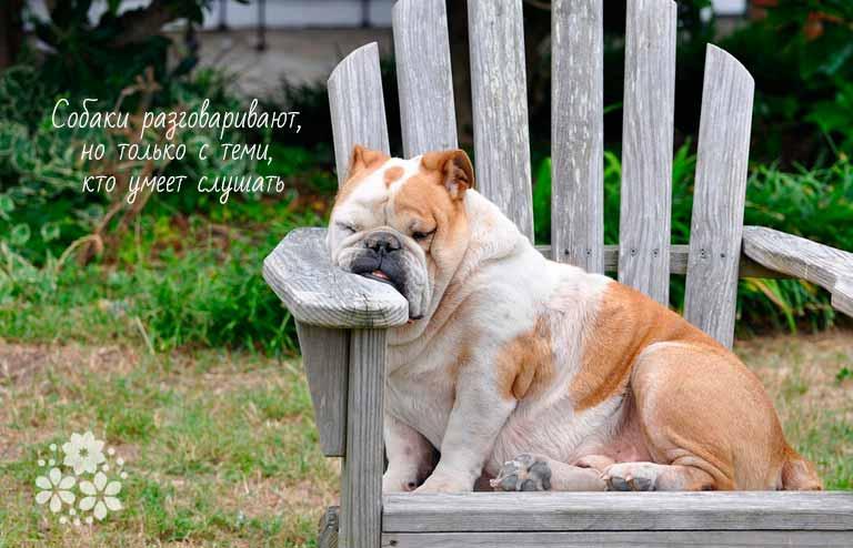 Красивые цитаты о собаках от великих людей