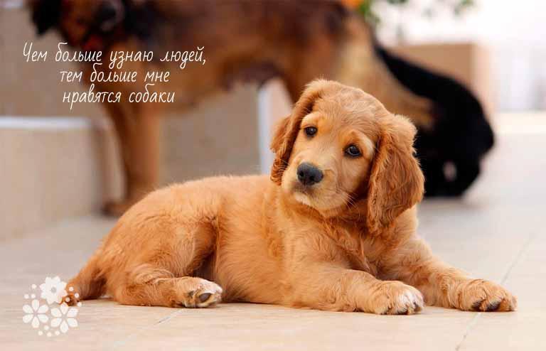 Цитаты про бездомных собак