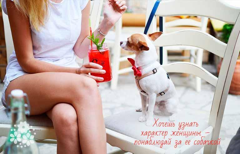 Смешные цитаты про собак