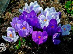 Цветы, как люди, на добро щедры. Цитаты про цветы