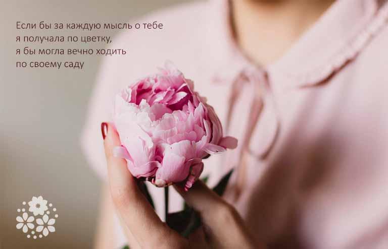 Цитаты про цветы от любимого