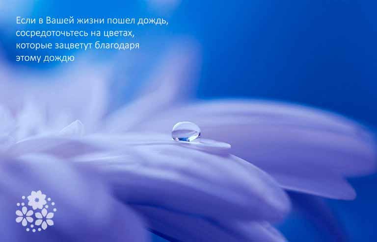Цитаты про цветы и жизнь