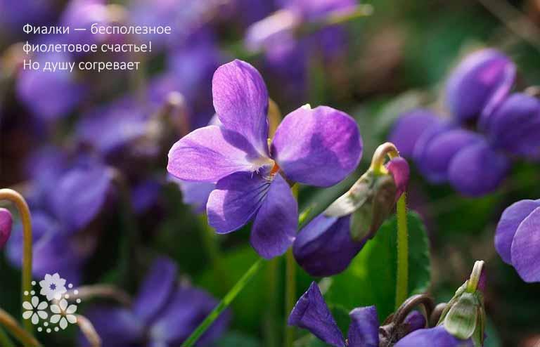Цитаты про цветы из книг и фильмов