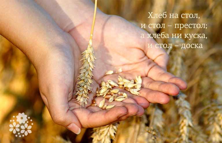 Пословицы и поговорки о хлебе для детей